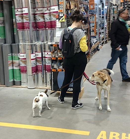 с собаками по магазинам